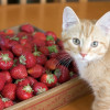 Thumbnail image for Watson and the Strawberries