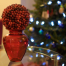 Thumbnail image for Cranberry Christmas Centerpiece