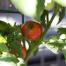 Thumbnail image for Grow, Baby, Grow